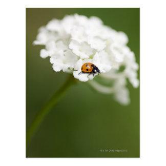 Imagem macro de uma joaninha em uma flor selvagem cartoes postais
