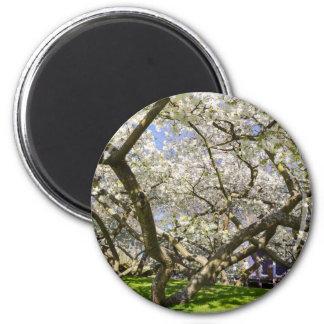 Íman Árvores de florescência com a flor branca no