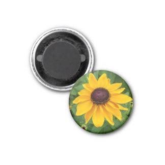 Íman Assento de Susan de olhos pretos bonito