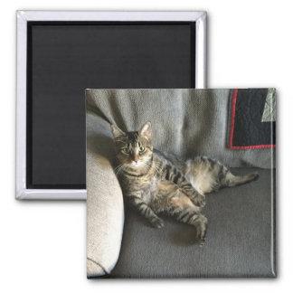 Íman Assento do gato