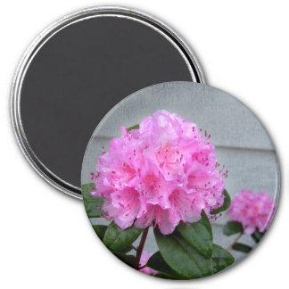 Íman Azálea cor-de-rosa