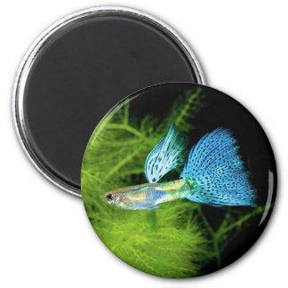 Íman Blue Grass Guppy