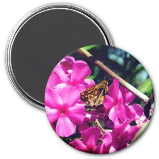Íman Borboleta bonito em flores cor-de-rosa