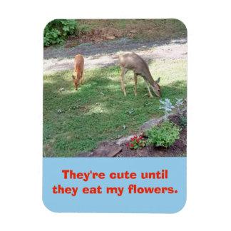 Íman Cervos bonitos até que comerem meu ímã das flores