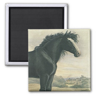 Íman Do esboço antigo da arte do ÍMÃ cavalo preto