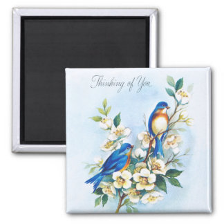 Íman Dois Bluebirds