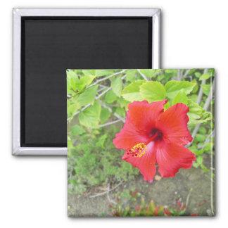 Íman Estigma vermelho do amarelo do hibiscus