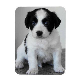 Íman Filhote de cachorro preto e branco adorável
