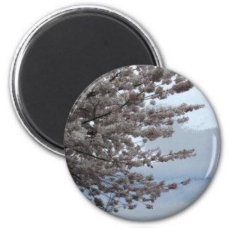 Íman Flor da árvore