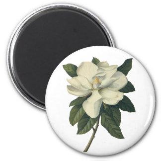 Íman Flores brancas de florescência da flor da magnólia
