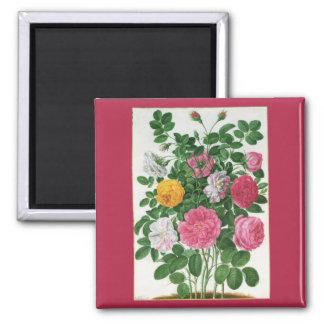 Íman Flores de florescência do vintage, rosas do jardim