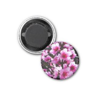 Íman Flores do primavera