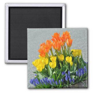 Íman Ímã colorido do impressão das tulipas do primavera