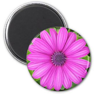 Íman Ímã roxo bonito da flor