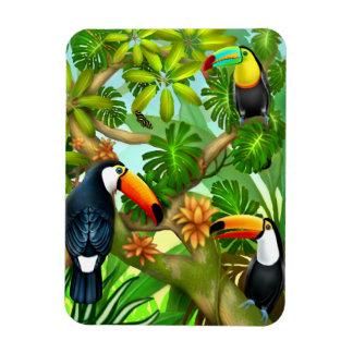 Íman Ímã tropical dos pássaros de Toucan