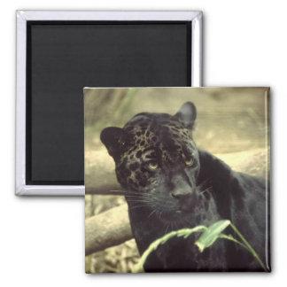 Íman Jaguar preto