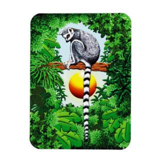 Íman Lemur de Madagascar
