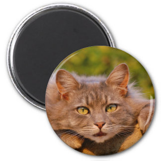 Íman Lindo Gato e seu Olhar