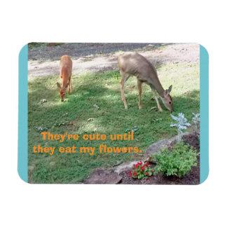 Íman Os cervos bonitos até comem o ímã 3x4 horizontal