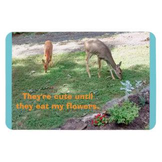 Íman Os cervos bonitos até comem o ímã 4x6 horizontal