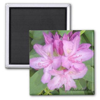 Íman Rododendro de florescência Bush