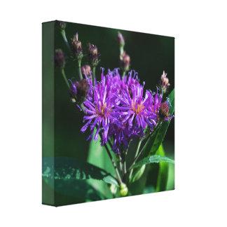 Impressão apalaches das canvas do Wildflower do Impressão Em Tela