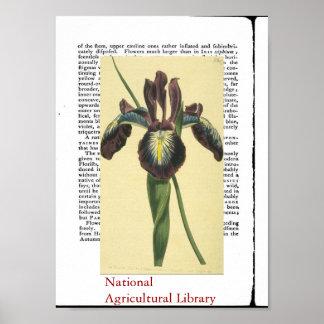Impressão botânico antigo