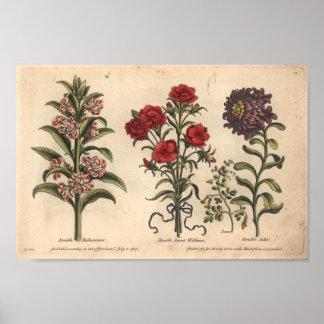 Impressão botânico Balsamina da arte da flor 1757