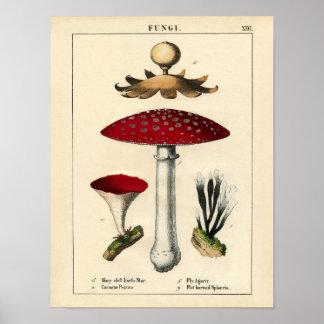 Impressão botânico - cogumelos & fungos