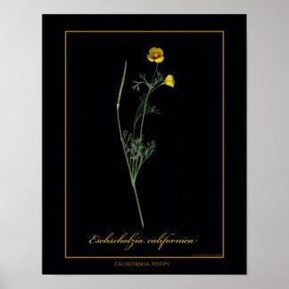 Impressão botânico da arte da papoila de Califórni