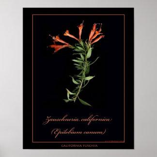 Impressão botânico da arte de Califórnia Fuschia