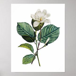 Impressão botânico do original da MAGNÓLIA por Red