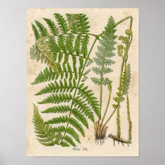 Impressão botânico do vintage -