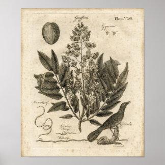Impressão botânico - GRACULA GYRINUS