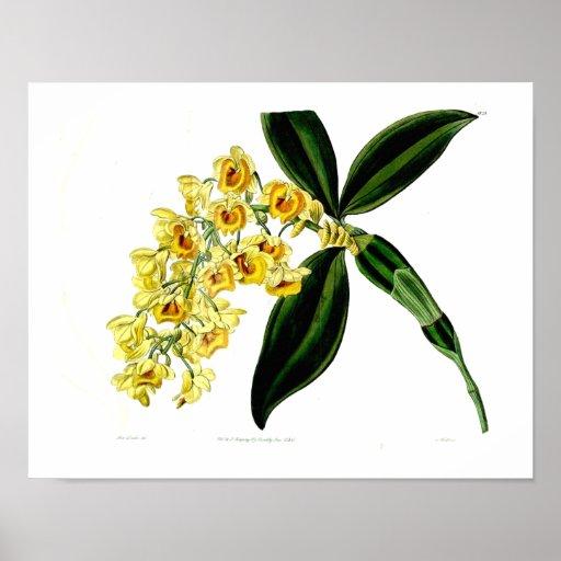 Impressão botânico