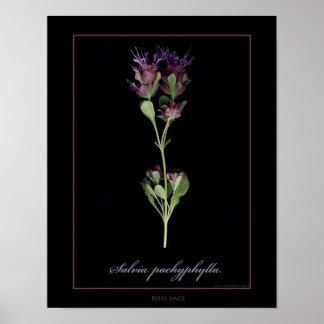 Impressão botânico prudente cor-de-rosa da arte