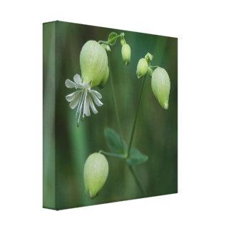 Impressão branco das canvas do Wildflower da