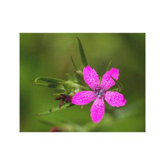 Impressão cor-de-rosa das canvas do Wildflower de