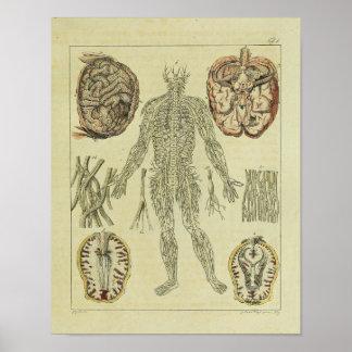 Impressão da arte da anatomia do cérebro dos