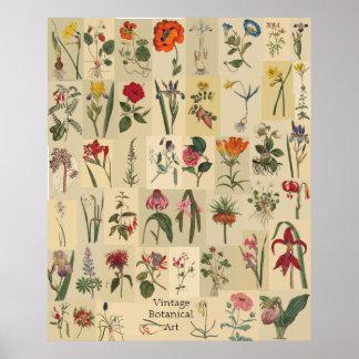 Impressão da colagem de Botanicals do vintage da n