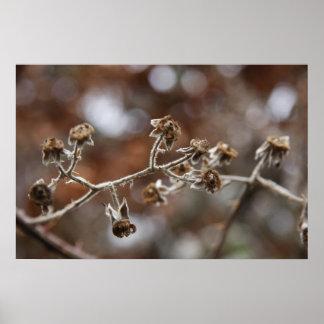 Impressão da foto da flora do inverno