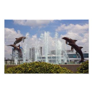 Impressão da foto dos golfinhos