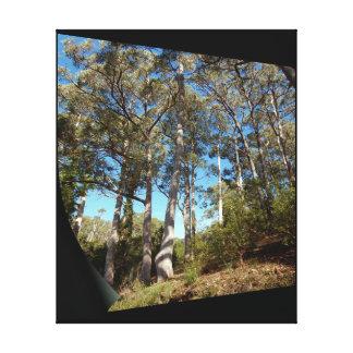 Impressão das canvas - árvores de goma majestosas