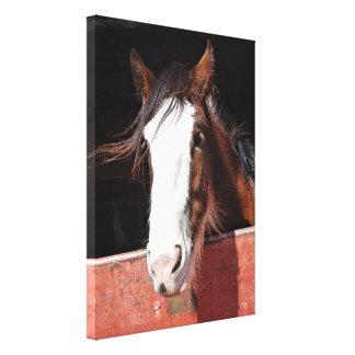 Impressão das canvas - cavalo de Clydesdale em um