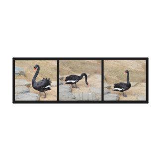 Impressão das canvas - cisne preta