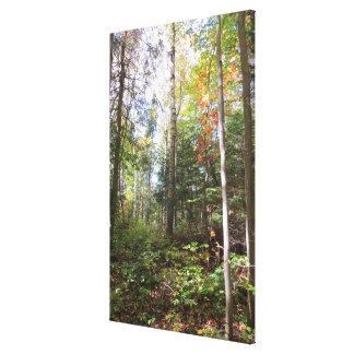 Impressão das canvas da floresta do outono