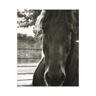 Impressão das canvas da foto do cavalo de Fresian Impressão Em Tela