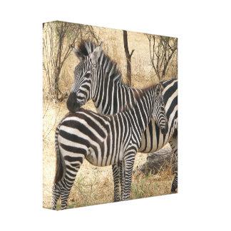 Impressão das canvas da zebra da mãe e do bebê