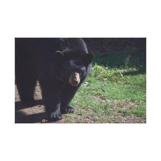 Impressão das canvas do urso preto impressão de canvas esticadas