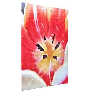 Impressão das canvas - flor da tulipa com bolhas